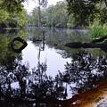 Fallen Oak Nearly Covered by Warren Thompson