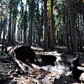 Fallen Sequoia Crescent Meadow Trail by Kyle Hanson