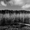 Fallen Timbers Battlefield by Chris Fleming