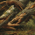Fallen Tree by Alexandre Calame