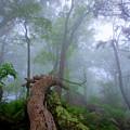 Fallen Tree by Anthony Zeljeznjak