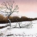 Fallen Tree Stainland by Paul Dene Marlor