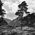 Fallen Tree by Terence Davis
