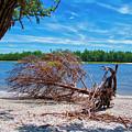 Fallen Tree by TJ Baccari