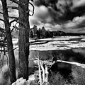 Fallen Trees In The Moose River by David Patterson