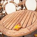 Fallen Yellow Autumn Leaf by Arletta Cwalina