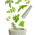 Falling Herbs by Amanda Elwell