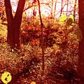 Falling Leaves by Nina Fosdick