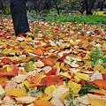 Falling Leaves by Tamar Mirianashvili