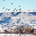 Falling Skies - Canada Geese by TL Mair