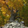 Falling Tree by David Lee Thompson