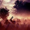 Fallow Deer In Fairytale World by Roeselien Raimond