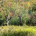 Fallow Meadow by Christian Mattison