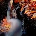Falls Foliage by Jim DeLillo