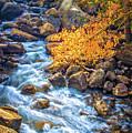Fall's Rush To South Lake by Lynn Bauer