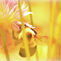 Fame Is A Bee by Bob Orsillo