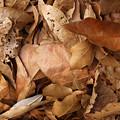 Family Of Leaves by Janet  Telander