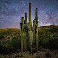 Family Of Saguaros  by Christian Garcia