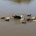 Family Swim by Brad Brailsford