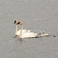 Family Swim by Linda Kerkau