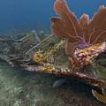 Fan Coral On Elbow Reef In Key Largo by Bob Hahn