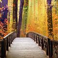 Fanciful Footbridge by Jessica Jenney
