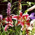 Fancy Lilies In Garden by Roger Soule