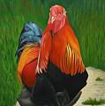 Fancy Rooster by Stephen Degan
