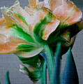 Fancy Tulip by Donna Bentley
