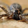 Spider Close Up by Glenn Gordon