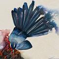 Fantail Flycatcher by Francisco Ventura Jr