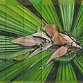 Fantail Palm Plateau by Kerryn Madsen - Pietsch