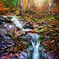 Fantasy Forest by Rikk Flohr