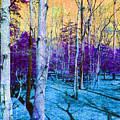 Fantasy Forest by Roseann Amaranto