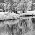 Fantasy Tree Reflection by Jim Simpson