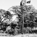 Faraway Windmill by Jack Sassard