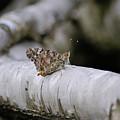 Farfalla by Ilaria Andreucci