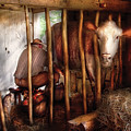 Farm - Cow - Milking Mabel by Mike Savad