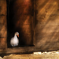 Farm - Duck - Welcome To My Home  by Mike Savad