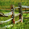 Farm - Fence - The Old Fence Post  by Mike Savad
