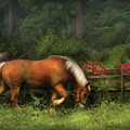 Farm - Horse - In The Meadow by Mike Savad