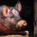 Farm - Pig - Piggy Number Two by Mike Savad