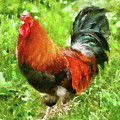 Farm - Chicken - The Rooster by Mike Savad