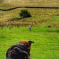 Farm Dog by Abbie Shores