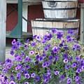 Farm Flowers by Tiffany Vest
