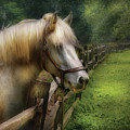 Farm - Horse - White Stallion by Mike Savad