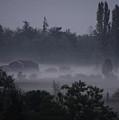 Farm In Fog by Shirley Heyn