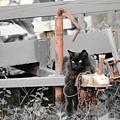 Farm Kitty Hanging Out by Lynda Dawson-Youngclaus