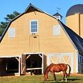 Farm by Mitch Cat