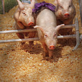 Farm - Pig - Getting Past Hurdles by Mike Savad